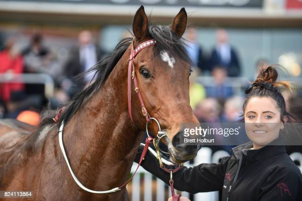 Shamport after winning the Join Victorian Breeders VOBIS Gold Ingot at Caulfield Racecourse on July 29 2017 in Caulfield Australia