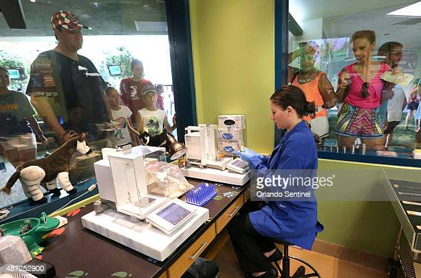 Shana Lavin Research Manager works in the lab as guests watch at the animal science center at Disney's Animal Kingdom on Aug 19 2015 in Lake Buena...