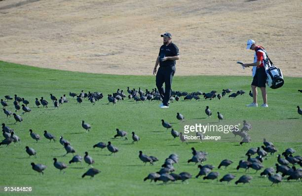 Shane Lowry walks through a flock of birds during the second round of the Waste Management Phoenix Open at TPC Scottsdale on February 2 2018 in...