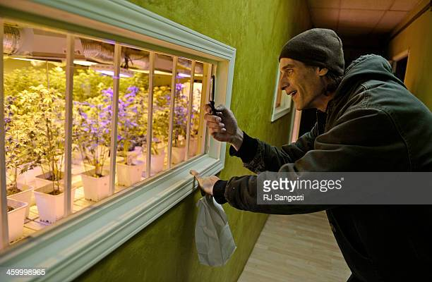 Shane Martin check out the grow room after buying recreational marijuana at 3D Cannabis Center in Denver January 01 2014 Colorado became the first US...