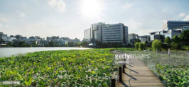 shanghai zhangjiang hi-tech park,in the middle of the building is a office building. - urban garden stock pictures, royalty-free photos & images