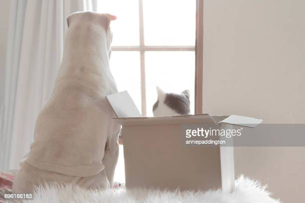 Shar pei dog and cat in box looking out of a window