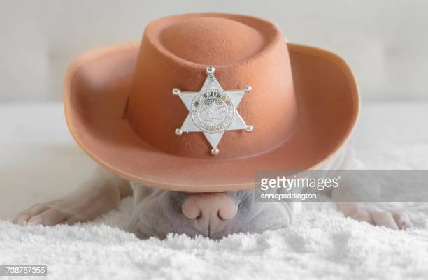 Shar pei dog wearing a cowboy hat with a deputy sheriff badge