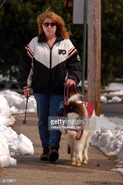Shari Bernstiel is helped while walking along the sidewalk by Tonto her guide horse March 19 2004 in Lansdale Pennsylvania Tonto a miniature horse...