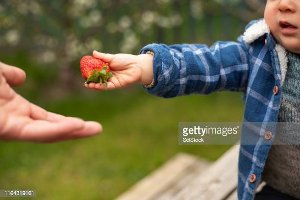 sharing his strawberry - strawberry stock pictures, royalty-free photos & images