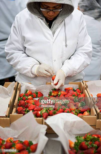 A Shari's Berries employee works at a distribution facility in Charlotte North Carolina US on Friday Feb 10 2012 The average American celebrating...