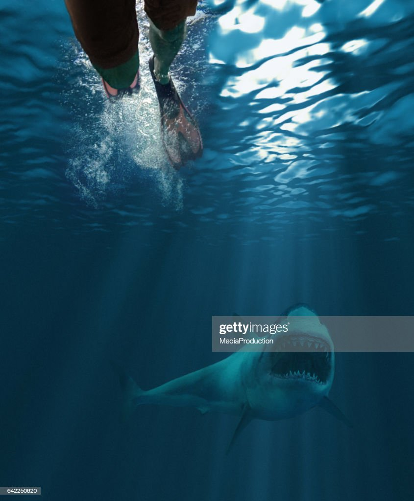 Shark attack : Stock Photo