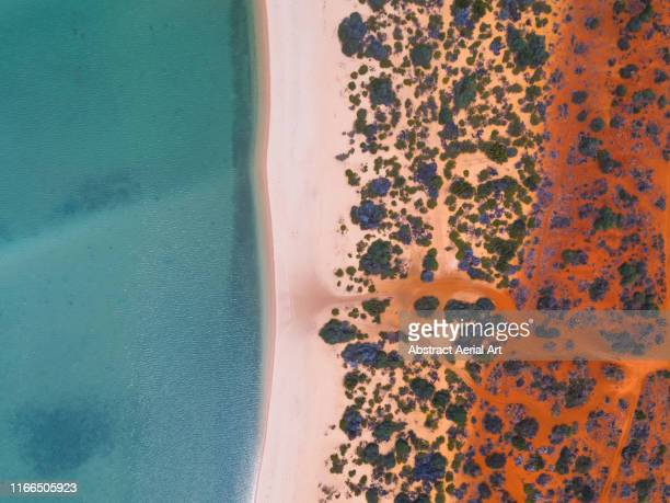 shark bay coastline shot from a drone point of view , australia - aerial view stock pictures, royalty-free photos & images