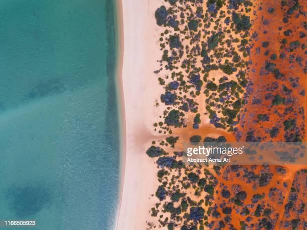 shark bay coastline shot from a drone point of view , australia - austrália ocidental - fotografias e filmes do acervo