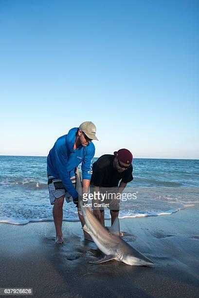 shark caught surf fishing in Brevard County, Florida