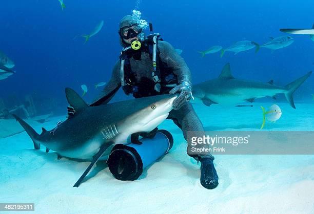 shark feeder with shark. - hypnose photos et images de collection