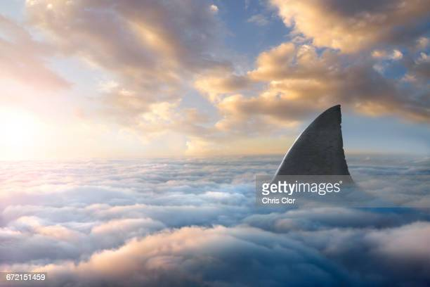 shark fin above clouds - shark fin stock photos and pictures