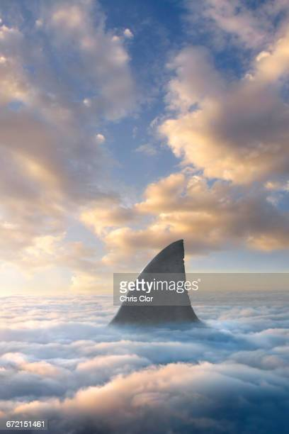 Shark fin above clouds