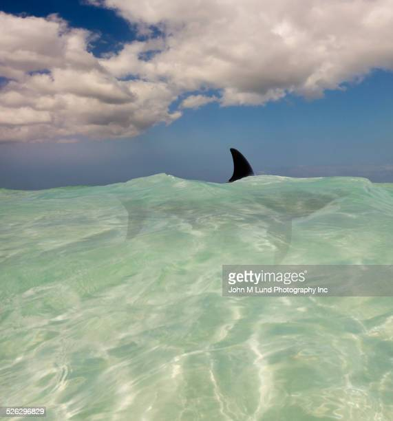 shark fin visible above tropical waves - shark fin stock photos and pictures