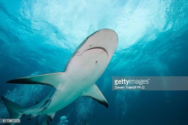 Shark in the Sky
