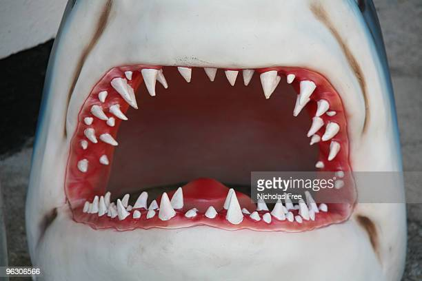 shark jaw - sharks stock pictures, royalty-free photos & images