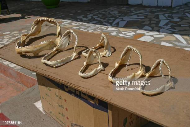 Shark jaws are sold in a street of the city of Djibouti, December 09 Djibouti, Indian Ocean.