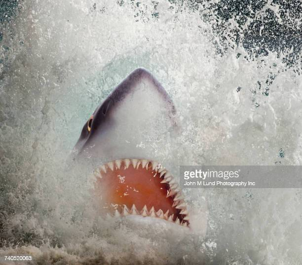 shark jaws emerging from splashing water - animal teeth stock pictures, royalty-free photos & images