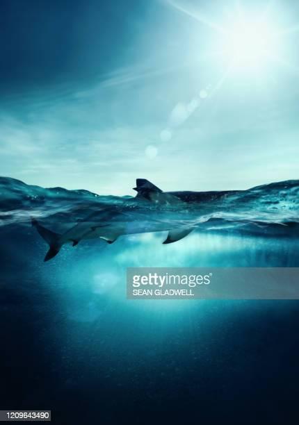 shark on water surface - mariner lebensraum stock-fotos und bilder