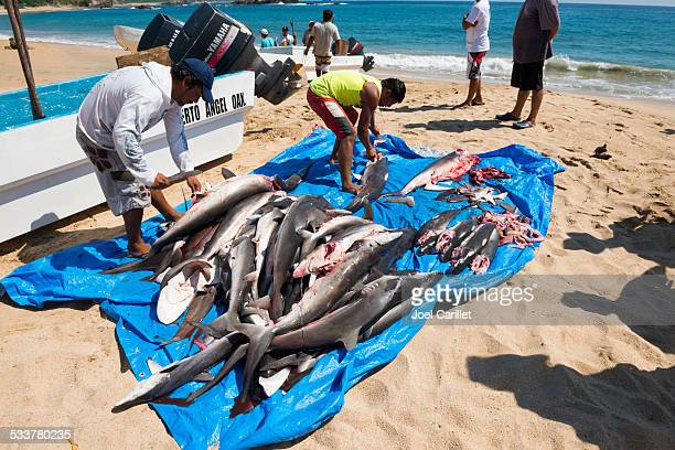 Shark overfishing on Mexico's Pacific coast