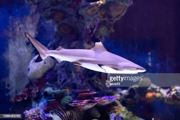 shark - storage tank stock photos and pictures