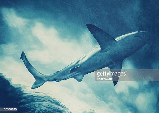 shark - animal teeth stock pictures, royalty-free photos & images