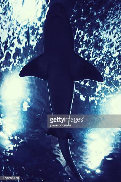 Silhouette de requin