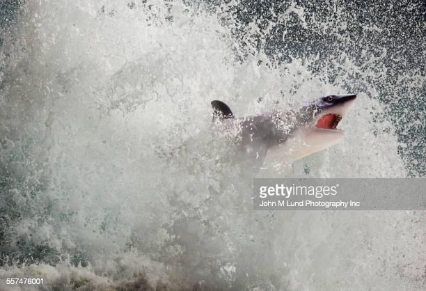 Shark splashing in crashing waves