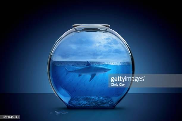 Shark swimming in fishbowl