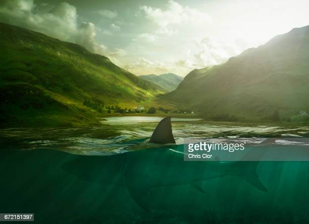 shark swimming in lake near mountains - shark attack - fotografias e filmes do acervo
