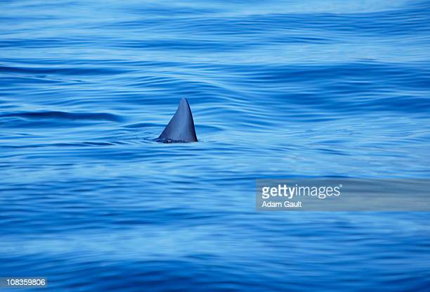shark swimming in ocean water - sharks stock pictures, royalty-free photos & images