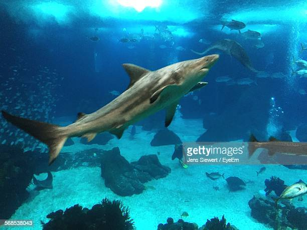 shark swimming in sea - jens siewert stock-fotos und bilder