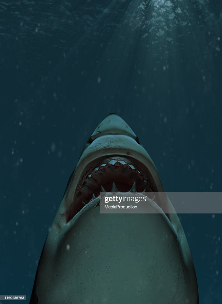Shark swimming towards the surface with mouth open : Stock Photo