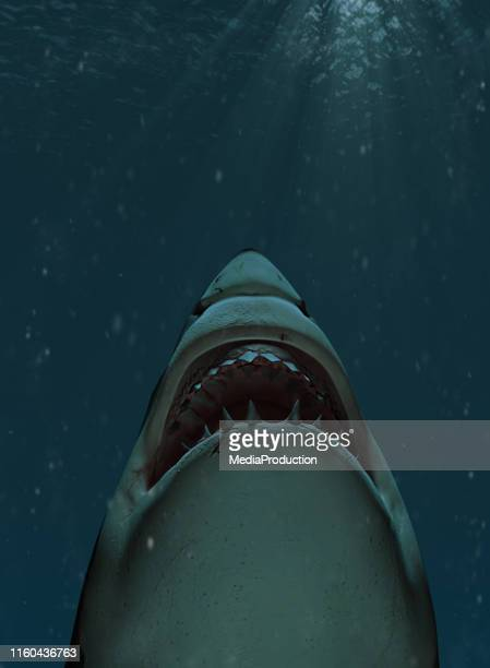 shark swimming towards the surface with mouth open - sharks stock pictures, royalty-free photos & images