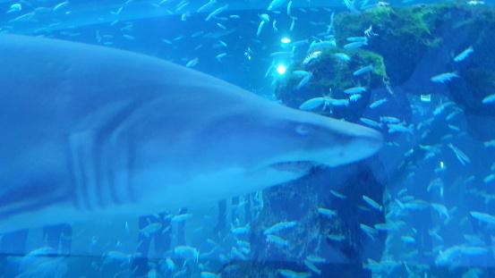 Shark swmming freely 1196553806