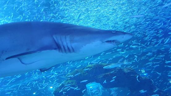Shark swmming freely 1196553810