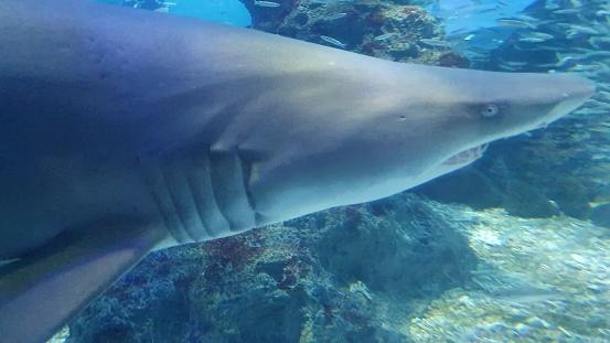Shark swmming freely 1196553880
