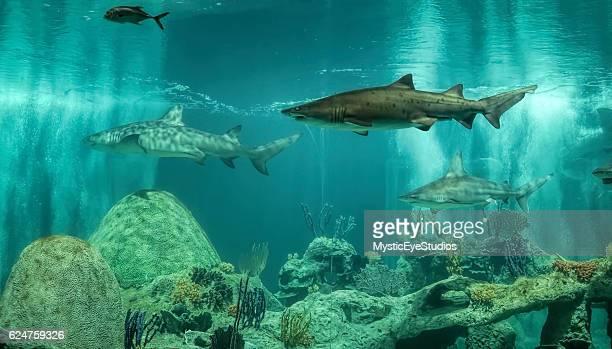 shark tank - shark tank stock photos and pictures