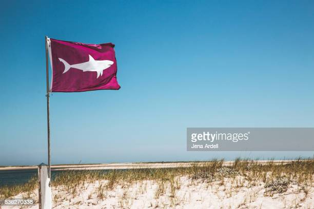 shark warning flag shark attack - shark attack stock photos and pictures