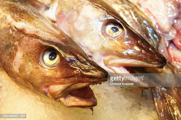 Sharkfish at market, close-up