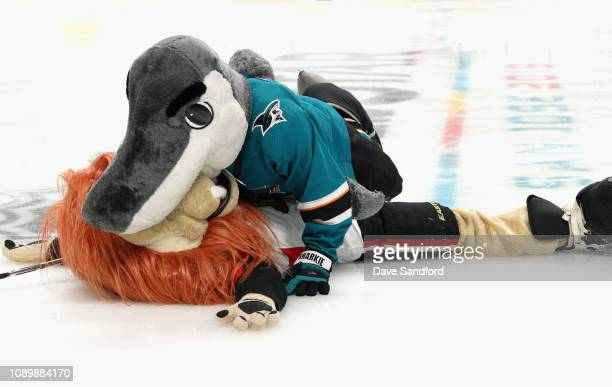 Sharkie of the San Jose Sharks and Spartacat of the Ottawa Senators participate in the the 2019 NHL AllStar Mascot Showdown at the SAP Center on...