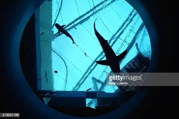 Sharks at Sentosa Island Singapore