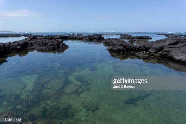 sharks at the tunnels in isabela island galápagos - isla de santa cruz islas galápagos fotografías e imágenes de stock