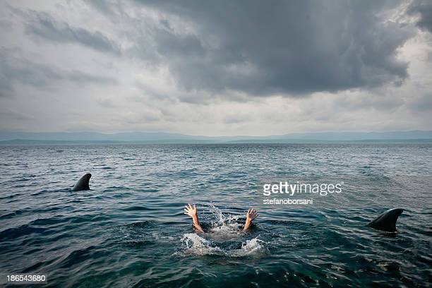 sharks attack - violence stock photos and pictures