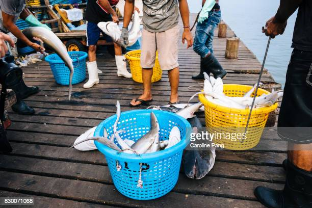 sharks catch with fins cut off. - caroline pang stock pictures, royalty-free photos & images
