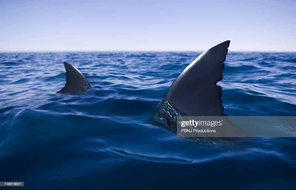 Sharks circling in ocean : Stock Photo
