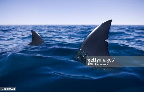 sharks circling in ocean - sharks stock pictures, royalty-free photos & images