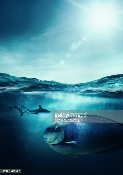 sharks hunting - sea life stock pictures, royalty-free photos & images
