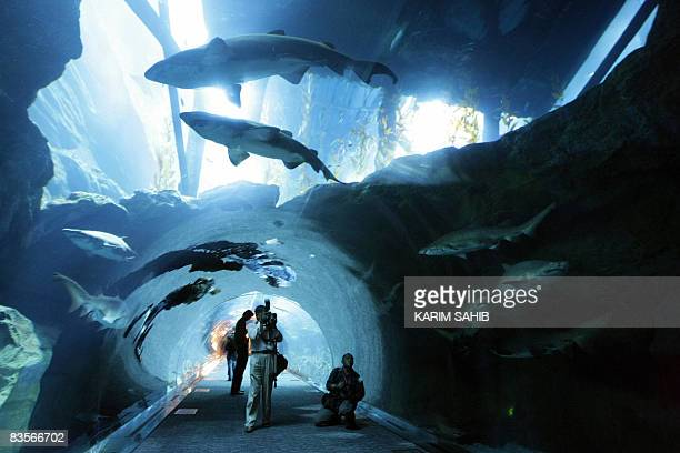 Sharks swims past divers preparing the aquarium in the new Dubai Mall hours before its official opening in the oilrich Gulf emirate on November 4...