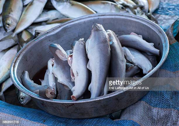 Sharks without fins and tails in a a fish market hormozgan bandar abbas Iran on December 27 2015 in Bandar Abbas Iran